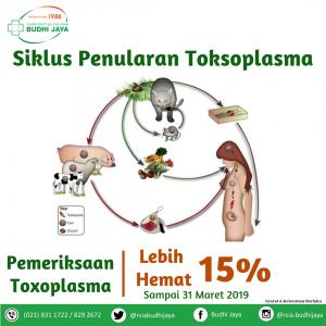 Siklus Penularan Toksoplasma